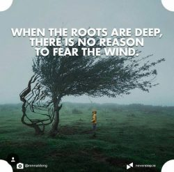 When the roots are deep, there is no reason to fear the wind.