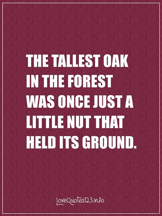 The tallest oak in the forest was once just a little nut that held its ground.