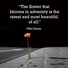 The flower that blooms in adversity is the rarest and most beautiful of all. – Walt Disney